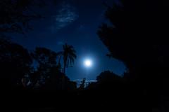 moon over Saint Petersburg (23) (Beau Finley) Tags: blue moon silhouette night stpetersburg florida palm fullmoon palmtree frame saintpetersburg stpete atnight beaufinley sonydscrx100