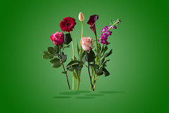 Flowers were taken from the vase. This way it's also a small bouquet., (Angelbattle bros) Tags: life pink flowers plant flower color green art beautiful beauty still colorful background floating indoor vase bouquet