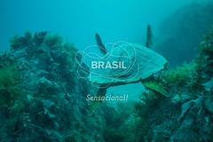 NE_Abrolhos0048 (Visit Brasil) Tags: horizontal brasil fauna natureza bahia nordeste detalhe externa abrolhos semgente subaqutica diurna
