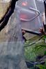 20130304 National Zoological Park, Washington DC 087 (yaoifest) Tags: zoo tamarin goldenheadedliontamarin