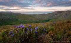 Nivenia Nirvana (Panorama Paul) Tags: sunrise southafrica westerncape honeybadger nikkorlenses nikfilters nikond800 wwwpaulbruinscoza kogelbergbiospherereserve paulbruinsphotography niveniastokoei