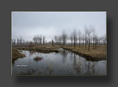 LAGUNA DEL CAÑIZAR.-Celebración del Dia de los Humedales (Juan J. Marqués) Tags: agua laguna teruel chopo humedales nieblas cañizar villarquemado