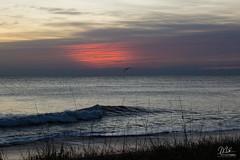 Sunrise color show + bird (Michael Seeley) Tags: ocean cloud bird beach beautiful clouds sunrise coast surf florida melbourne surfing atlantic coastline cloudporn newyearsday 2016 satellitebeach mikeseeley michaelseeley