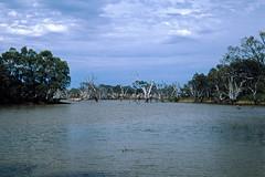 Lake in Australia (Stefan Ulrich Fischer) Tags: australia 35mm travel water lake abandoned scanned slide victoria blue sky clouds trees dead minoltaxd7 outback outdoor oz kodakektachrome downunder 1000 20fav