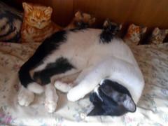1 mês de Namastê aqui em casa - DSC02505 (Dona Minúcia) Tags: sleeping cute art animal cat relax bed peace arte paz gato cama fofo dormindo gracinha namastê