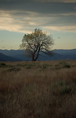 Lone Tree (Frank McNamara) Tags: mountains landscape dusk droh