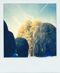 Painswick Topiary IV (Pictures from the Ghost Garden) Tags: uk color colour film vintage project polaroid topiary unitedkingdom gloucestershire tip 600 integral instant instantcamera churchyards painswick impossible ip yews onestep instantfilm vintagecameras 635cl polaroid635cl impossibleproject