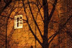Wandelen langs de singel. Utrecht.. 010 (George Ino) Tags: winter shadow copyright holland tree church window netherlands facade utrecht nederland boom schaduw raam silhouet muur catharijnesingel bakstenen geertekerk georgeino georgeinohotmailcom