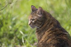 kiko caluire 21 mars 2016  lightroom-5 (lucile longre) Tags: cosette mars chien chat jardin kiko printemps caluire