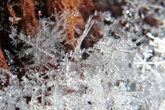Snowflake1 (jb5860) Tags: artisticphotos bestartistic jb5860