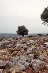 bergrug op de grens tussen Libanon en Isral, 1994 (wally nelemans) Tags: 1994 isral mountainridge bergrug natuurlijkegrens