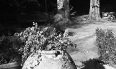 8202.Jarre (Greg.photographie) Tags: blackandwhite bw film analog 50mm nikon noiretblanc 400 nikkor f18 nikonfe jarre foma r09