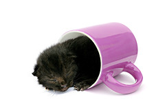 nap (brescia, italy) (bloodybee) Tags: pink white black cup animal cat fun cub kitten nap sleep humor n kitty whiskers newborn mug letter 365project 52weeksproject azproject