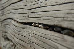 DSC_6679-1 (AndrewBaillie) Tags: wallpaper nikon tokina1224 driftwood covehithe d7000