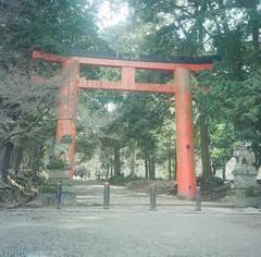 50630008 () Tags: 6x6 tlr japan rolleiflex square 120film  nippon      6x6format fujipro160ns rolleiflexautomatmodel3 carlzeisstessar75mmf35 k4b2 film