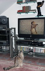 Our Vicky . Fascination TV and Roadrunner! (Uhlenhorst - Sorry, need a longer break!) Tags: animals germany bayern deutschland bavaria tiere 2016