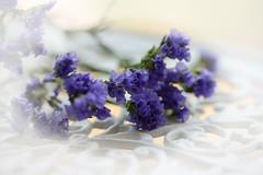 Purple Haze 2 (Ptolemy the Cat) Tags: flowers stilllife purple vignette everlasting statice nikond600