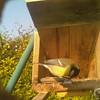 01-20160323_091942-00 (www.cabane-oiseaux.org) Tags: 09h 2016032309h012016032309194200jpg 20160323