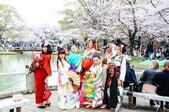 Hanami at Yoyogi Park 2016 (Dick Thomas Johnson) Tags: park japan tokyo spring shibuya geiko geisha  cherryblossom   yoyogi  hanami  yoyogipark      flowerviewing      geigi hanamiparty  viewcherry hanamicelebration hanamiparties