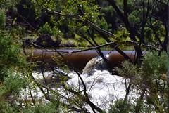 DSC_0190_942 (3) (Derek Shore) Tags: brown tree nature water beautiful wow river carson cool nikon carsonriver nikond3300 d3300