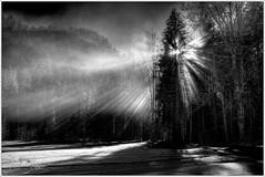 Wintersonne / winter sun (Karl Glinsner) Tags: schnee winter blackandwhite mountains fog forest landscape outdoors austria österreich nebel berge landschaft wald snwo schwazweiss