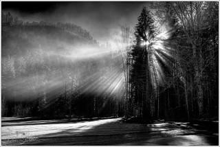 Wintersonne / winter sun