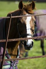 Horse @ Woburn Park (magicpicture.co.uk) Tags: life park wild horse woburn nikond40 nikond5200 dilpreetsohanpal wwwmagicpicturecouk