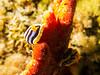 IMG_0534 (eye[4]eye) Tags: egypt diving ägypten tauchen bluewaves