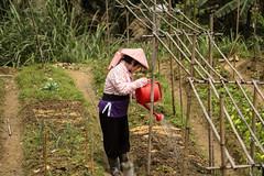 IMG_3022 (EchelonForce) Tags: garden tea taiwan taipei