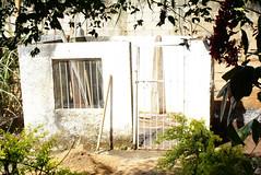 Naotho Paracelos - Reforma do Canil - Chcara Tangara (Foto: Naotho) (naothop) Tags: harry potter cu gato linda lingua antena livro gatinho irm concreto pedreiro mostrando