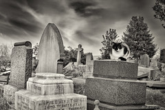 A Cat Of Solace (jon.a_hession) Tags: sky white black graveyard animal cat 50mm blackwhite nikon quiet dramatic peaceful graves granite marble tombs bnw solace nikkor50mmf14d d700 50mmphotography