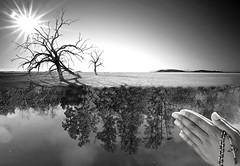 Desolate (costelbcc) Tags: california longexposure shadow sea usa sun lake tree mike zeiss dead michael long exposure branch desert sony palmsprings salt palm springs threesisters alpha desolate f28 chen saltonsea salton 1635mm a900 redhillmarina sal1635z