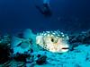 IMG_0369 (eye[4]eye) Tags: egypt diving ägypten tauchen bluewaves