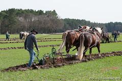 Pflgetag (FKnorr) Tags: horse deutschland farmland bauer farmer plow brandenburg pferd plough acker lausitz feldarbeit cropland pferdegespann pflug kaltblut carthorse pflgen lusatia feldbearbeitung plouhing papitz horsesteam
