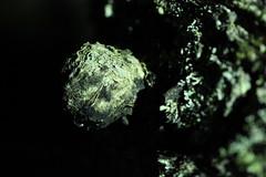(Aiteann) Tags: wood tree nature bark lichen