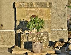 ~~La vieille Fontaine ~~ (Jolisa) Tags: fleurs cat plante chat ombre pot pierres soir vieillefontaine avril2016charlotte
