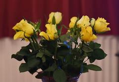 DSC_0802 (PeaTJay) Tags: flowers roses plants macro nature rose gardens fauna reading flora sigma indoors micro closeups berkshire rosebuds lowerearley nikond750