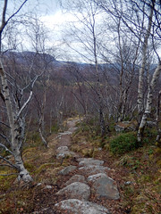Path through forest, 2016 Mar 23 (Dunnock_D) Tags: uk trees sky cloud grass forest woodland grey scotland highlands cloudy unitedkingdom britain path highland footpath badenoch creagbheag