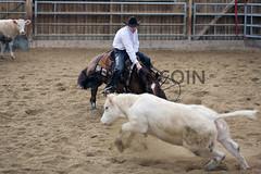 BJ1A3673 (yoann coin) Tags: en horse france western cutting bons equitation ccha chablais ncha charmot