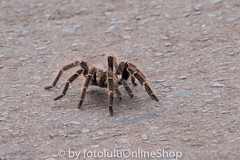 Argentinien_Insekten-55 (fotolulu2012) Tags: tierfoto