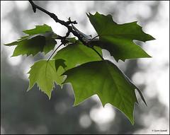 (2273) Nature (QuimG) Tags: naturaleza macro nature nikon natura zen specialtouch quimg quimgranell joaquimgranell afcastell obresdart