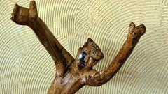 IMG_6314 - folk art (molovate poco presente) Tags: canon arte folk tommaso powershot spaventato hs presepe legno bagheria trattore olivo popolare ulivo radice disperazione aiuto sx40 evola volate hekp tafme molovate