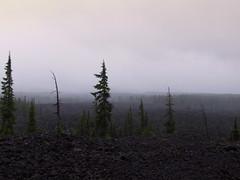 Pacific Northwest2015-36 (Felson.) Tags: wood trip travel trees sky usa mist holiday fog alberi clouds oregon honeymoon nuvole cielo pacificnorthwest nebbia pnw viaggio mckenzie vacanza bosco cascadia foresta pini mckenziepass