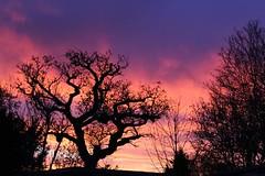 Magical sunrise (stephyAmanda) Tags: morning england love beauty sunrise landscape amazing purple magic magical morningsky themorningsky
