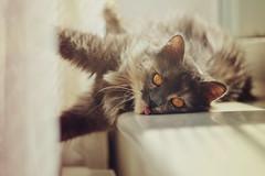 Crazy Mika (iliketobeweird) Tags: windows cats nature animals cat feline funny