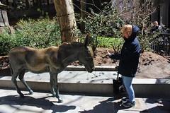 IMG_3249 (jimward85) Tags: boston donkey freedomtrail democrat opposition oldcityhall