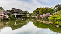 Heianjingu Shrine / Kyoto, Japan (yameme) Tags: travel flowers nature japan kyoto sony evil   sakura cherryblossoms alpha  kansai      heianjingushrine mirrorless a5100 emount