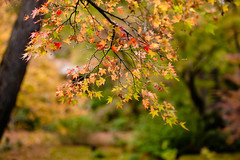 BM7Q1383.jpg (Idiot frog) Tags: green leaves japan canon eos leaf kyoto arashiyama 1dx