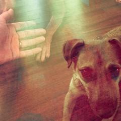 gimme your hand, you dog (meeeeeeeeeel) Tags: dog hand perro cachorro mo