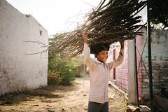 Sticks (DEARTH !) Tags: travel boy india kid sticks fatehpursikri agra single worker dearth in manuallabor uttarpradesh